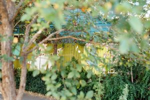 Shoot It With Film Lomography Color Review by Jennifer Stamps