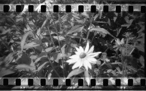 DIY Holga 35mm Sprocket Hack by Jennifer Stamps on Shoot It With Film