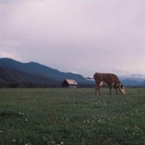 Altai Republic Travel Film Photography by Katya Larkina on Shoot It With Film