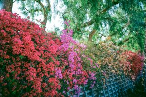 Los Angeles on Film by Kevan Wilkinson on Shoot It With Film
