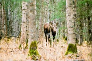Alaska Roadtrip on Film by David Rose on Shoot It With Film