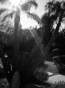 Palm Trees and Sun Flare - Fuji GS645S Medium Format Film Camera Review on Shoot It With Film