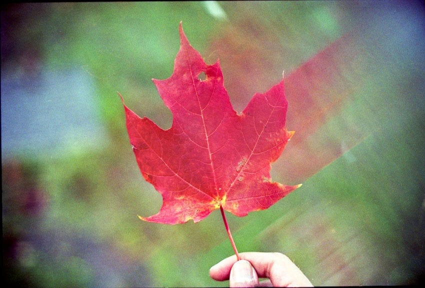 Creative Filters for Film Photography by Spektrem Effects on Shoot It With Film - Leaf radial blur