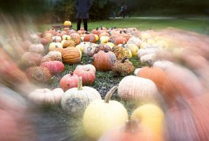 Creative Filters for Film Photography by Spektrem Effects on Shoot It With Film - Pumpkin patch blur