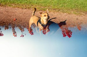 Creative Filters for Film Photography by Spektrem Effects on Shoot It With Film - Double Exposure
