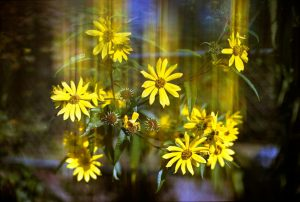 Creative Filters for Film Photography by Spektrem Effects on Shoot It With Film - Flowers with motion blur