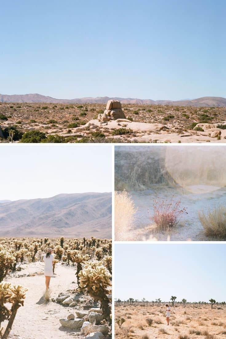 Medium Format Film Photography Joshua Tree Travel Story