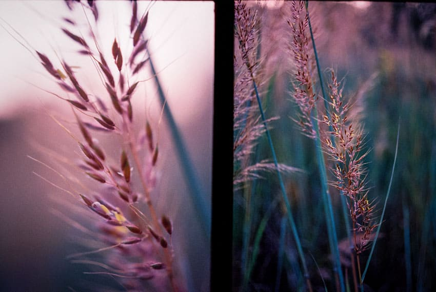 Flowers - Olympus Pen F Half Frame Film Camera Review by Jen Golay on Shoot It With Film