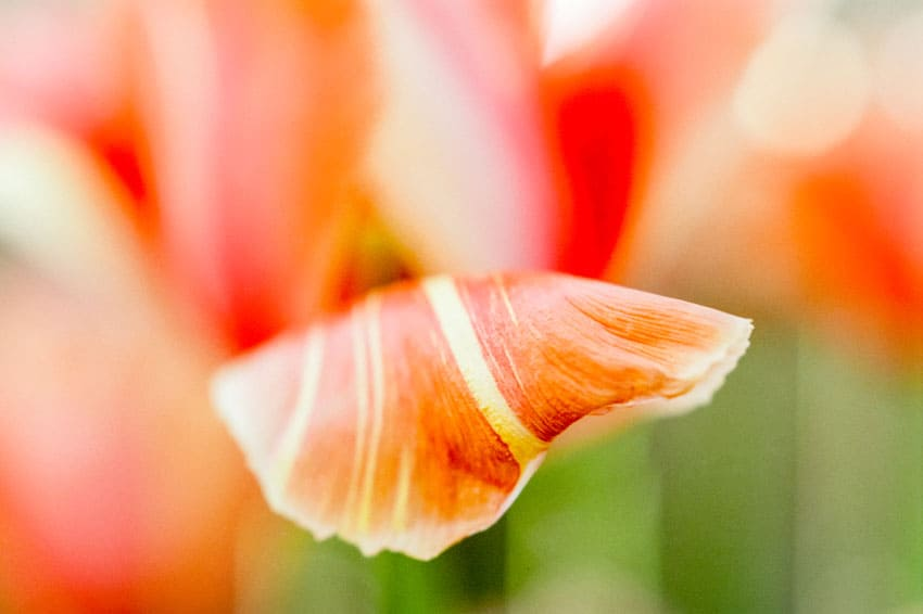 Floral macro film photography with a close-up filter - Floral Macro Photography on a Budget by Jen Golay on Shoot It With Film