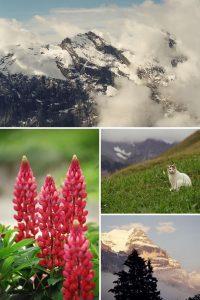 35mm Film Photography Switzerland Travel Story Kodak Gold 200