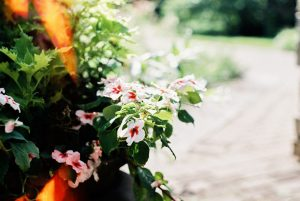 Flowers by a walkway - 6 Film Photography Tips for Beginners by Samantha Stortecky on Shoot It With Film