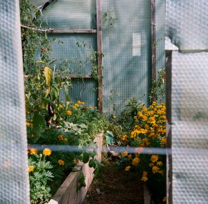 Greenhouse - French Catalonia Travel Story by Michael Raven on Shoot It With Film