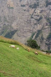 35mm film image of goats on a mountainside - Switzerland Travel Story by Marley Bosshardt on Shoot It With Film