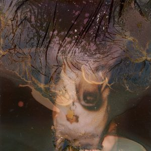 Polaroid image of a dog - Polaroid Film Soup Experiment by Jennifer Stamps on Shoot It With Film