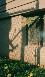 Shadow of a fence on a wall - The Seed I Nurtured Fine Art Series by Chloe Xiang on Shoot It With Film
