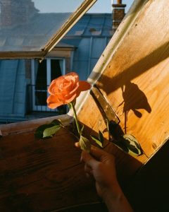 35mm film image of a person holding a rose in the sunlight - Fine Art Series by Nick Prideaux on Shoot It With Film