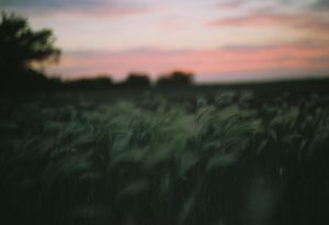 35mm film photography of a meadow - Impressions of Mother Nature by Ida Meadow on Shoot It With Film