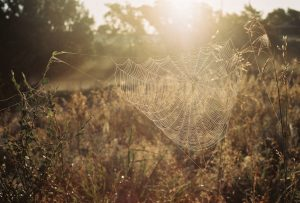 35mm film photography of a field - Impressions of Mother Nature by Ida Meadow on Shoot It With Film