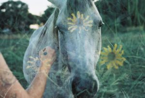 35mm film photography of a horse and flowers double exposure - Impressions of Mother Nature by Ida Meadow on Shoot It With Film