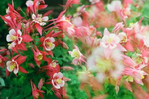 35mm film photography of flowers - Impressions of Mother Nature by Ida Meadow on Shoot It With Film