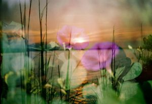 35mm film photography of flowers and a lake double exposure - Impressions of Mother Nature by Ida Meadow on Shoot It With Film