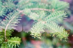 35mm film photography double exposure of a pine tree and a cityscape - 5 Creative Film Photography Projects to Try When You're Uninspired by Amy Berge on Shoot It With Film