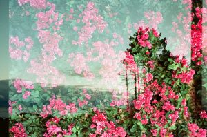 35mm film photography double exposure of flowers and a city street - 5 Creative Film Photography Projects to Try When You're Uninspired by Amy Berge on Shoot It With Film
