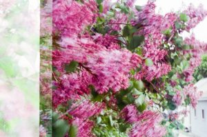 35mm film photography of flowers - 5 Creative Film Photography Projects to Try When You're Uninspired by Amy Berge on Shoot It With Film
