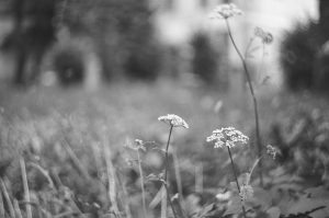 Field on 35mm black and white film - Eastern Europe Travel Story by Taylor Stoker on Shoot It With Film