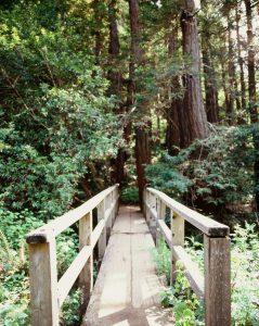 Narrow walking bridge on Velvia 100 slide film - Film Photography Slide Film Guide by David Rose on Shoot It With Film