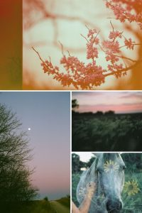 Impressions of Mother Nature 35mm Film Canon AE-1