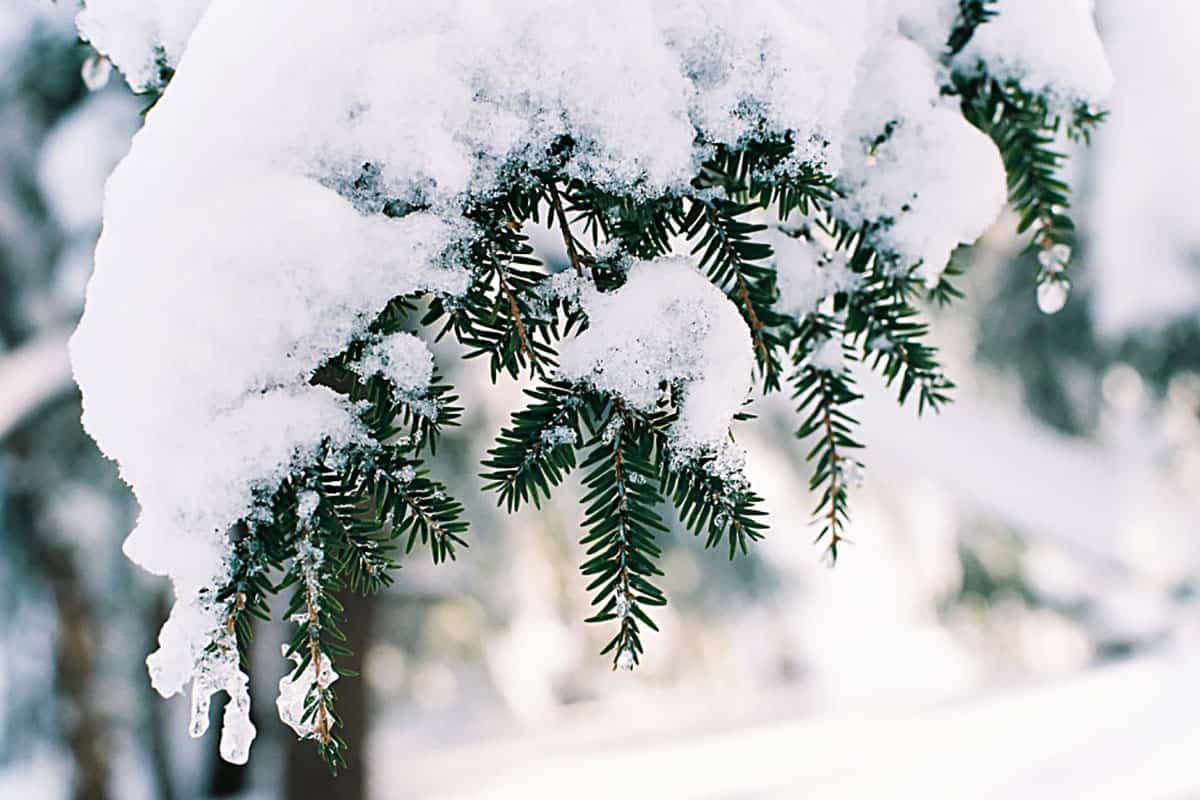 35mm film image of branches covered in snow - How to Shoot Film in the Snow by Jen Golay on Shoot It With Film